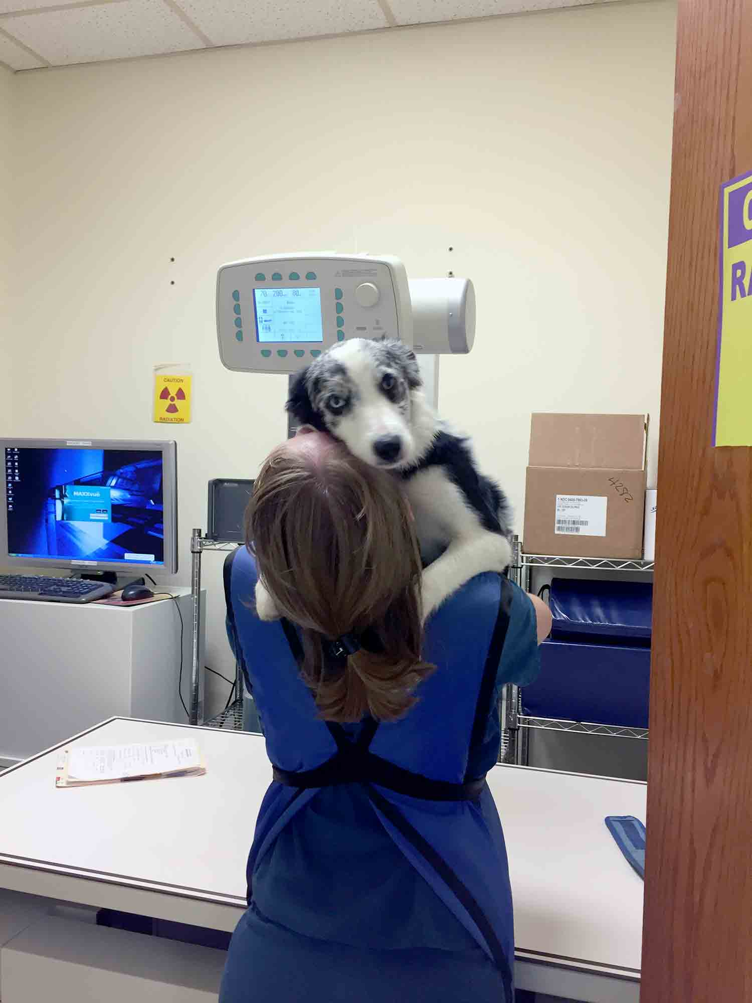 dogs with diagnostic tools