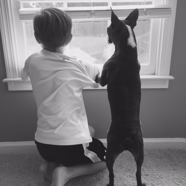 dog and boy looking out the window